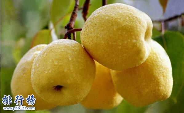 立冬吃什么水果