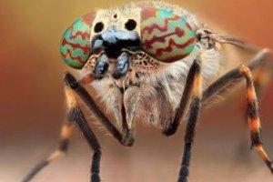 世界上最毒的虫子有哪些?世界十大最毒虫子排行榜