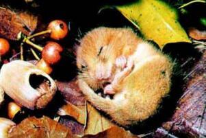 需要冬眠的动物有哪些?15种冬天冬眠的动物盘点