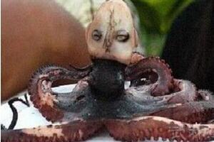 印尼章鱼人是真的吗?人头章鱼竟然发出婴儿啼哭声