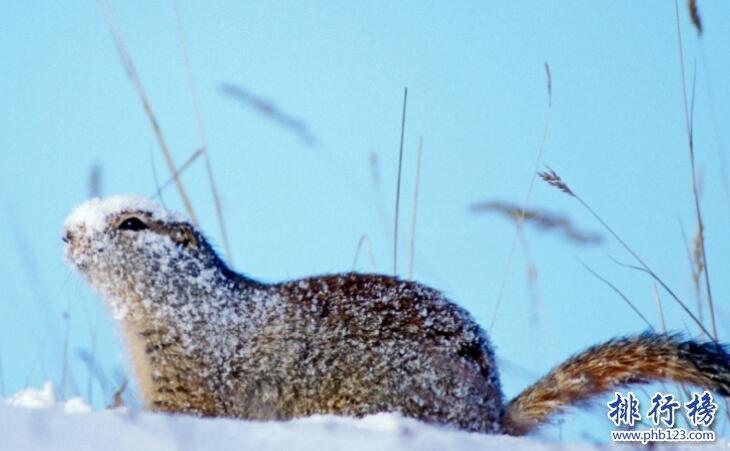 冬眠 动物_冬眠的动物有哪些 揭秘二十种动物冬眠的方式(3)_排行榜123网