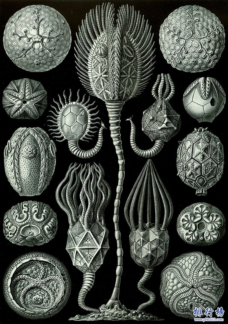 奥陶纪十大恐怖生物 揭秘奥陶纪生物大灭绝原因