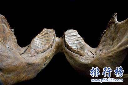 最大的硬骨鱼类:利兹鱼身长35米,体重如同三头非洲象