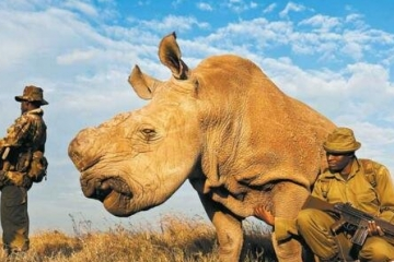 世界十大濒危动物排行榜 世界上即将灭绝的动物