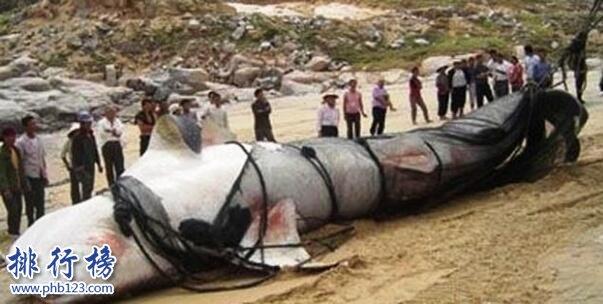 新疆喀纳斯湖水怪之谜真相大白,疑似15米32吨的巨型哲罗鲑(视频)