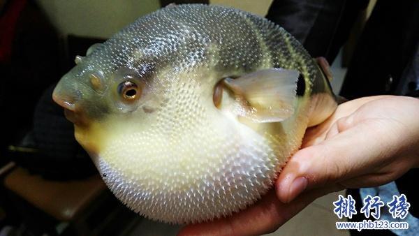 世界十大最毒的动物排行榜 毒性最强的动物盘点