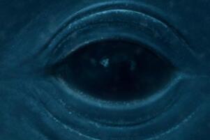 深??志逯⑹鞘裁?面对大海无法克制的惧怕(附深??志逯⒉馐酝?