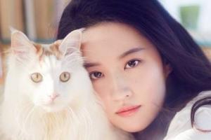 2018年中国十大美女排行榜 中国最美女明星排名都有谁