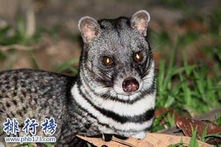 已灭绝的十大可爱动物:白鳍豚西亚虎爪哇虎都已灭绝