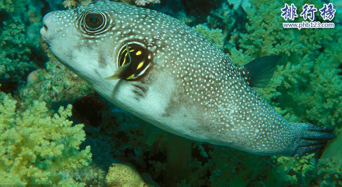 世界十大毒王动物:最毒海黄蜂让人30秒丧命!