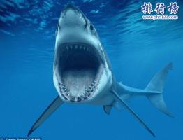 世界上十大最危险动物:第一名可能就在你身边(一年杀死72万人)
