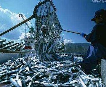 世界四大渔场:世界四大渔场排名和简介