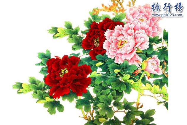 漳州水仙花_中国有哪些名花?中国四大名花详细介绍(附图片)_排行榜123网