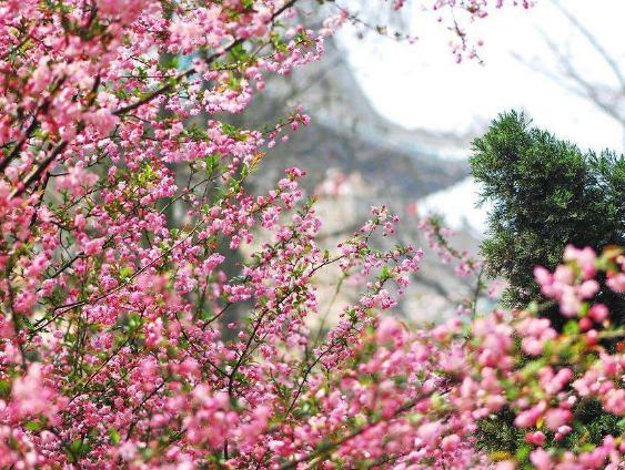 武汉市内一日游路线去哪好?武汉十大一日游最佳路线推荐