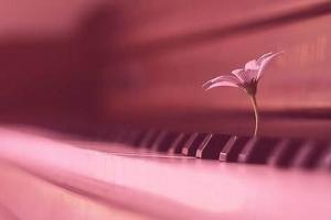 怎樣看是否適合學鋼琴?盤點十種不適合學鋼琴的人