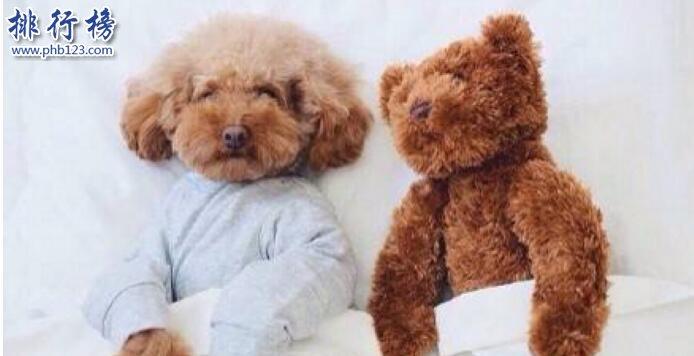 十大便宜好养的狗狗,第一便宜又可爱不得不服