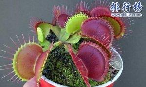 10种常见有趣的植物,第七高两米,第一可家养!