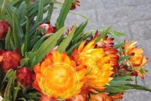 10種常見有趣的植物,第七高兩米,第一可家養!