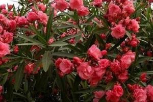 全球十大毒性最强植物,最后三种最常见,千万小心!