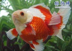 适合家养的十种鱼,第二只能独养,第一常见!