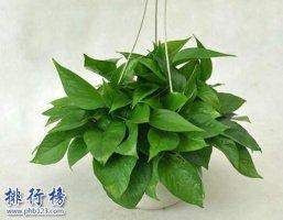 家中养什么植物好?适合家养的十种植物!