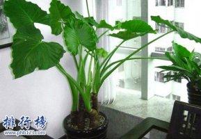 十大不能家养的植物,快看看你家有没有!