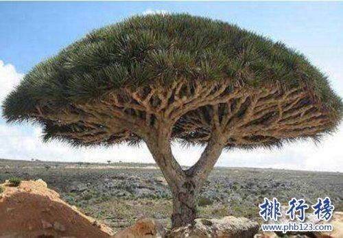 盘点寿命最长的十大植物,第一寿命长达十万年!