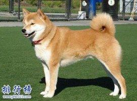 盘点全球最耐寒的十种狗狗,第一来自中国!