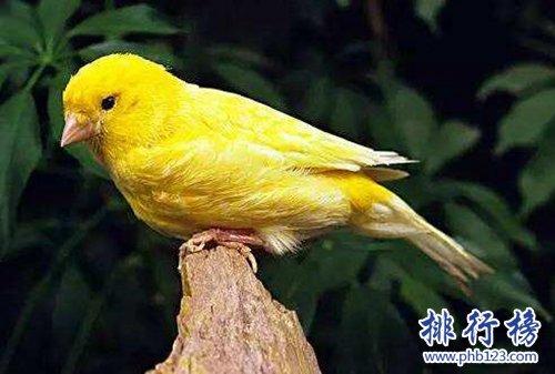 适合家养的十种鸟类,聪明又好养!