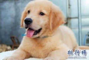 十种脾气好的狗狗排名,巴哥犬第三,第一毋庸置疑!