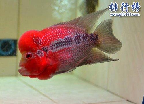 世界十种最漂亮的鱼,第一美若仙子!