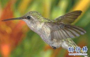 世界上十种最特别的鸟类,最后一个活体表情包