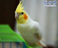 盘点常见的十种鹦鹉,第七最长寿,第一最可爱