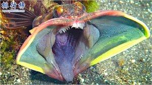 世界十大恐怖怪鱼,个个奇特令人惊叹