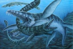 海洋十大霸主排行:第一体型巨大身带剧毒