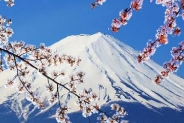 2019泰晤士日本大学排名:东大登顶日本,全球第42位