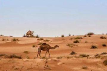 世界十大最大半島,阿拉伯第一面積322萬km2