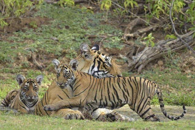 陆地动物10大单挑王:百兽之王老虎仅列第六位