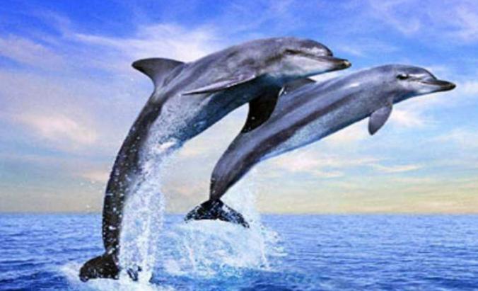 十大对人类友好的动物:跟人类最友好的动物