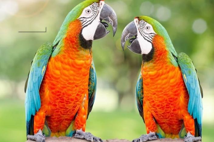 热门宠物种类有哪些?全球十大最受欢迎宠物排行榜