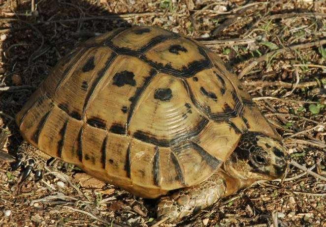 十大难养的陆龟,最难养的陆龟养大不易不适合新手养!