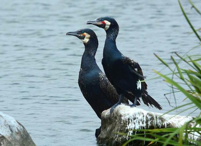 什么鸟漂亮又与人亲近?排名前10最粘人的鸟