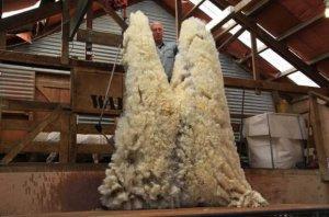 新西兰十大必买特产,羊毛制品最受欢迎