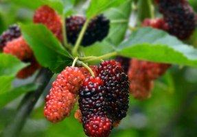 十大补肾水果排名 补肾的水果有哪些