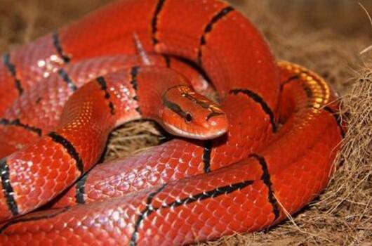 澳大利亚十大致命毒蛇排行榜 棕蛇致死数最多,第六又称死亡蛇