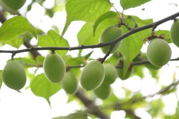 产妇必吃的12种水果 养生又美容,你都选对了吗