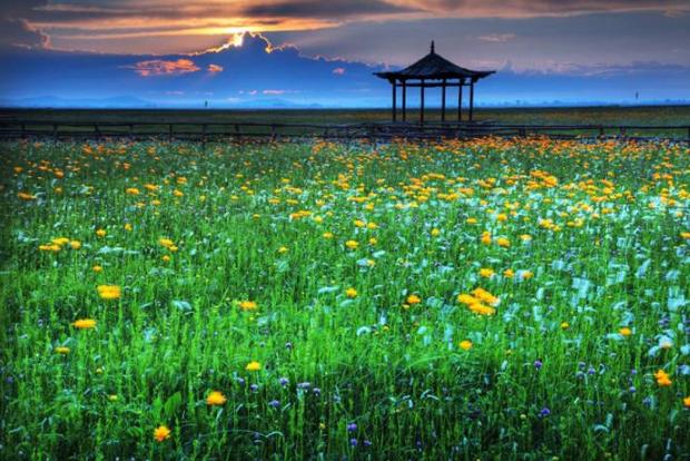 中国最美十大花海 让你享受最独特的浪漫