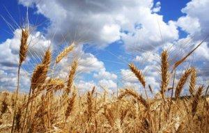 2017年全國各省糧食產量排行榜,黑龍江糧產占比排名第一