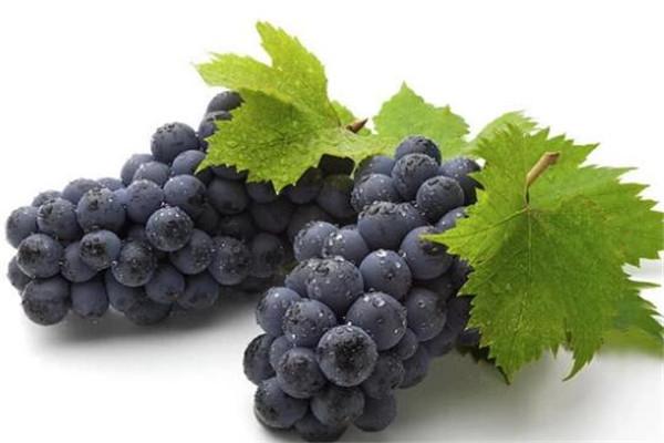 胃寒吃10种水果暖胃 这些暖胃水果你还不知道吗