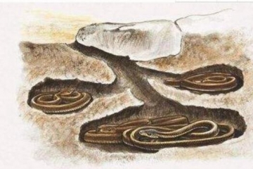 十种动物冬眠的方式,动物过冬的方式有哪些